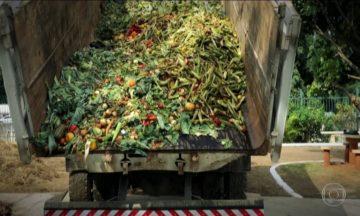 Todos os anos, cada brasileiro joga no lixo mais de 41 quilos de comida