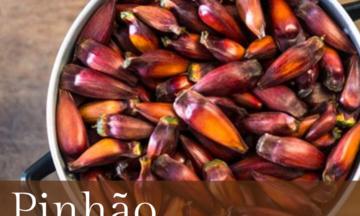 Comer pinhão na hora certa evita indigestão e problemas gástricos